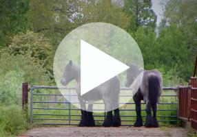 Natuurbeheer door paarden