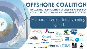 Coalition offshore energy