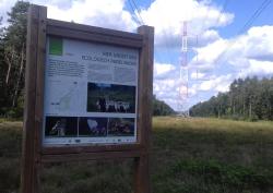 Biodiversity under high voltage lines